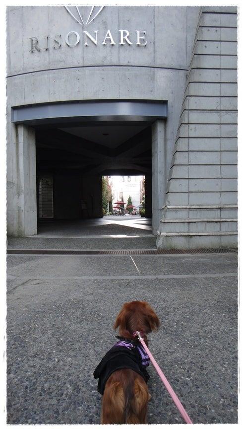 旅犬Lani&Leaのほほん風船記-リゾナーレ小淵沢