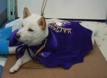 犬ともスタッフブログ