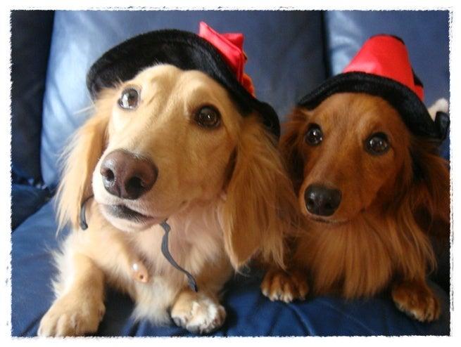 旅犬Lani&Leaのほほん風船記-Halloween