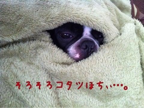 ボステリパンの日々-ipodfile.jpg