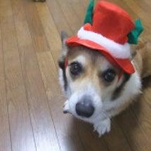 待ち遠しいクリスマス…