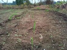 茨城農業体験のブログ-2011-11-03 12.17.42.jpg2011-11-03 12.17.42.jpg