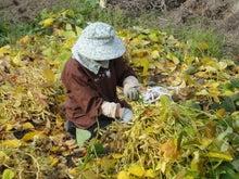 山梨の桃・ぶどう・体験農園~手島農園スタッフブログ