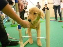 PUPSのブログ ~子犬の社会化・育て方~