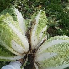 中浜農園のブログ  農業やろうぜ!-2011110807150001.jpg