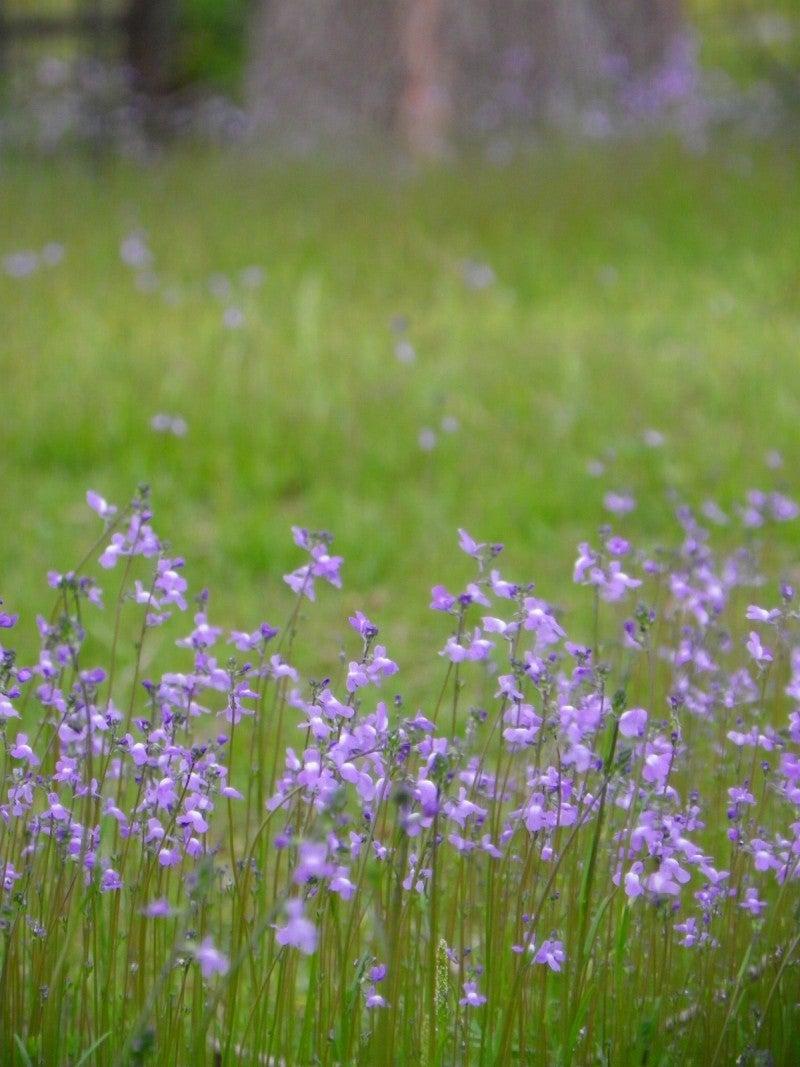 野の花ーフリーサイトから