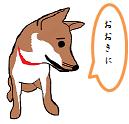 柴犬 吉平