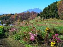 チャレンジキャンプ2011-里山