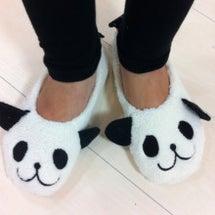私パンダになります!