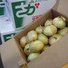 新玉葱と缶詰めのグラタン☆の画像