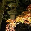秋の特別拝観の画像