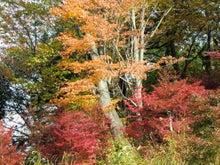 高尾山上の紅葉