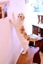 猫カフェてんてん
