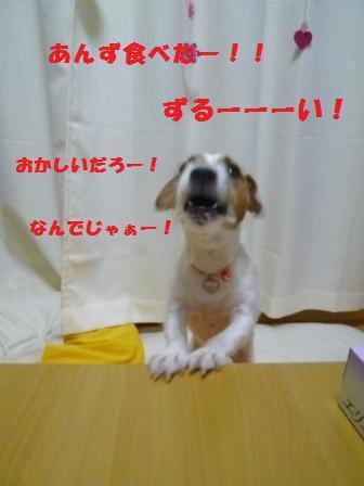 ジャック・ラッセル・テリア♪                        ☆☆ かりん&あんずの日記☆☆