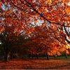 秋。そして冬。の画像