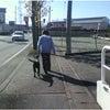 前橋市・渋川市 犬のしつけ ( 外回り)の画像