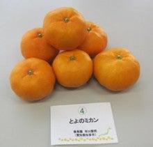 日本茶と野菜のブログ