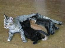 続・猫と薔薇の日々 時々犬と笛