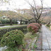 2011.11.11 京都 ~銀閣寺~の画像