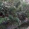 2011.11.11 京都 ~ 南禅寺 ・ 金地院 ~の画像