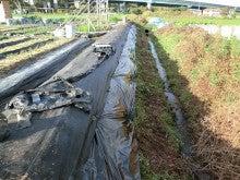 耕作放棄地をショベル1本で畑に開拓!週2日で10時間の野菜栽培の記録 byウッチー-111121畦法面整備