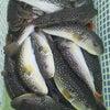 午前釣果の画像