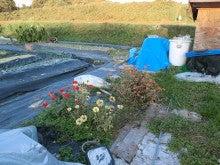 耕作放棄地をショベル1本で畑に開拓!週2日で10時間の野菜栽培の記録 byウッチー-111121新たなサトイモ区画作成01