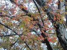 $松尾祐孝の音楽塾&作曲塾~音楽家・作曲家を夢見る貴方へ~-韓国の紅葉の季節