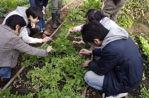 $元麻布農園~Motoazabu Farm~