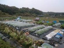 耕作放棄地をショベル1本で畑に開拓!週2日で10時間の野菜栽培の記録 byウッチー-111128今日の農作業の出来栄え04