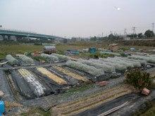 耕作放棄地をショベル1本で畑に開拓!週2日で10時間の野菜栽培の記録 byウッチー-111128今日の農作業の出来栄え01
