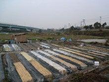 耕作放棄地をショベル1本で畑に開拓!週2日で10時間の野菜栽培の記録 byウッチー-111128今日の農作業の出来栄え02