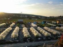 耕作放棄地をショベル1本で畑に開拓!週2日で10時間の野菜栽培の記録 byウッチー-111129今日の農作業の出来栄え03