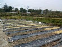 耕作放棄地をショベル1本で畑に開拓!週2日で10時間の野菜栽培の記録 byウッチー-111128白色疫病対策試行前-東側