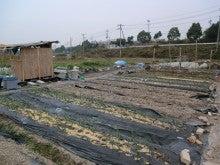 耕作放棄地をショベル1本で畑に開拓!週2日で10時間の野菜栽培の記録 byウッチー-111128白色疫病対策試行前-西側