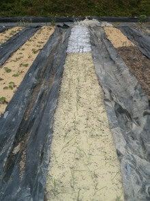 耕作放棄地をショベル1本で畑に開拓!週2日で10時間の野菜栽培の記録 byウッチー-111128白色疫病対策21-東#10ネオア-ス試行後