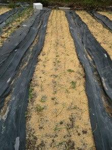 耕作放棄地をショベル1本で畑に開拓!週2日で10時間の野菜栽培の記録 byウッチー-111128白色疫病対策13-東#5ネオアース試行前
