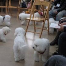 白い抱き犬会♪行って…