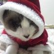 猫と粋る展商品ライン…