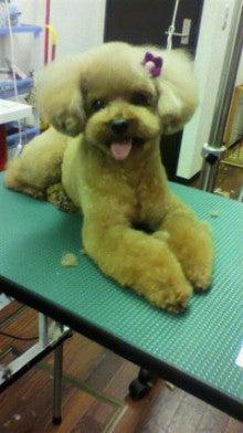 リク&トト ただいま看板犬見習い中-2011101117450002.jpg