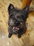 所沢の犬専門ペットシッタートコトコ -みんとプロフィール