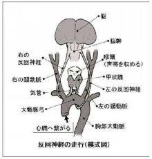 神経 反 麻痺 回 反回神経麻痺の治療なら横浜市上大岡駅の西山耳鼻咽喉科医院まで