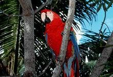 南米・鳥獣虫魚・探遊