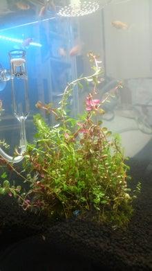 ヒバリの金魚と共に歩む旅-水槽内