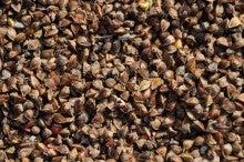 chu98xpのブログ-赤花ソバ採種