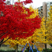 彩りの公園