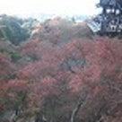 京都行ってきました~の記事より