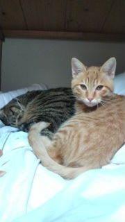 猫さん達の休憩所-F1010612.jpg