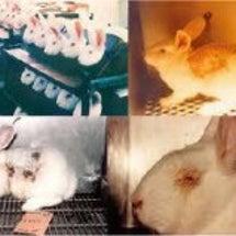 動物実験大大大大大反…