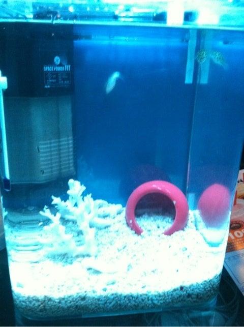 海水魚水槽 立ち上げ 難しい1週間 | 海水魚 ...